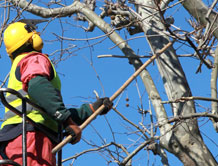 Tree Cutting Services NZ